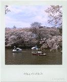 お花見の写真日記